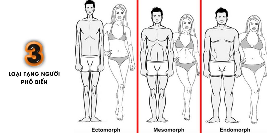Cơ thể con người có mấy dạng ?